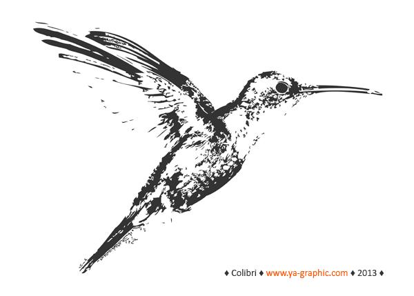 Hummingbird (le colibri)