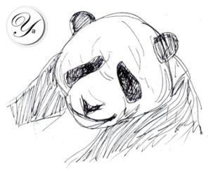 Filtre Panda de Google (21 novembre 2012)