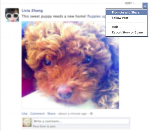 Promouvoir les publications de vos amis dans Facebook ?