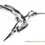 L'algorithme Hummingbird (Colibri) de Google