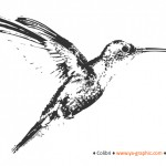 L'impact de Google Hummingbird (colibri) serait imperceptible
